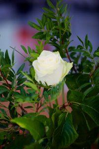 FlowerArranging 028