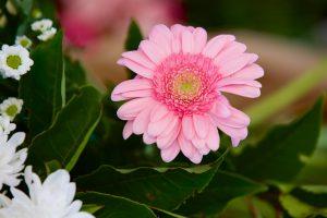 FlowerArranging 058