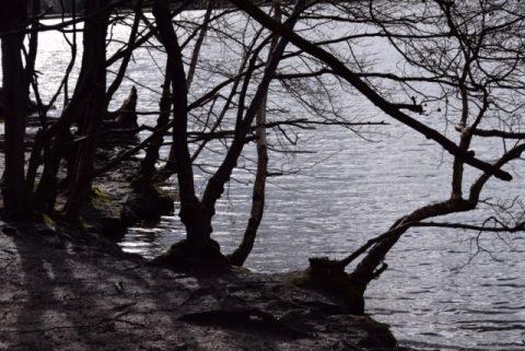 Black Park - Robert Coleman