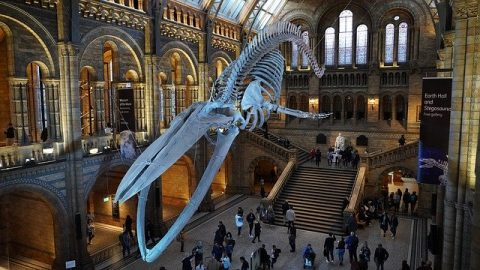 Downloaded from : https://pixabay.com/photos/natural-history-museum-hall-london-4587057/  License  Pixabay License Free for commercial use No attribution required